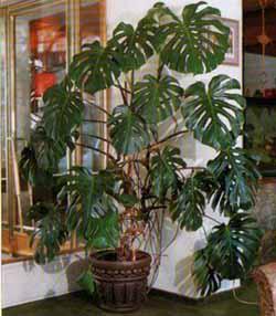 Комнатных растений с целью