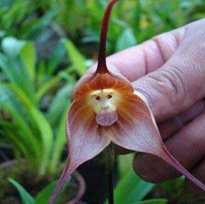 Редкие и необычные цветы