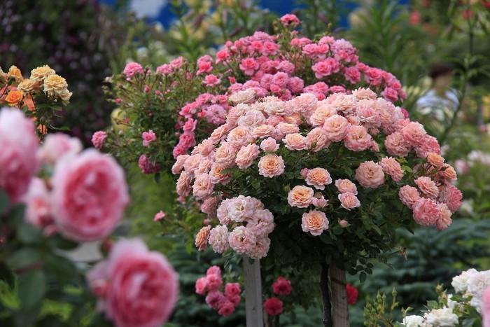 Каталог садовых цветов - названия
