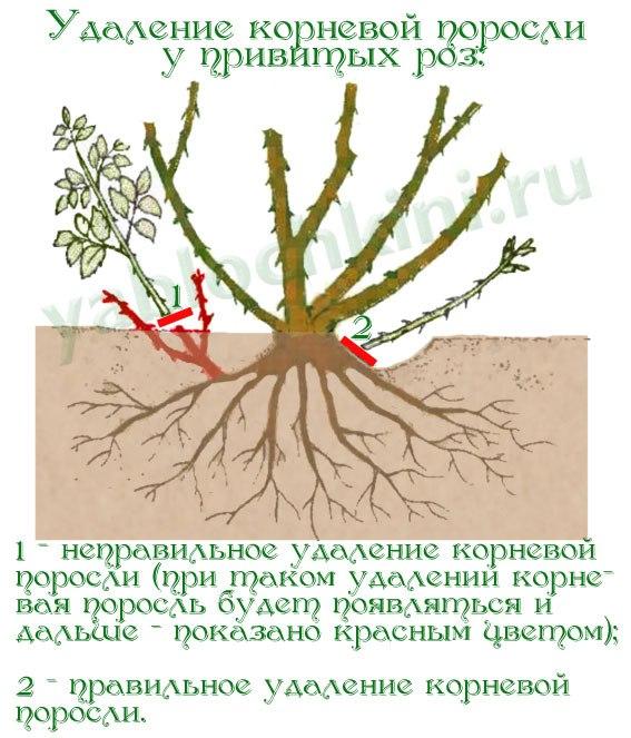 rozdikiy2