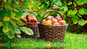 Сезонный календарь работ на август