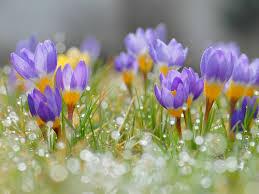 Сезонный календарь работ на март