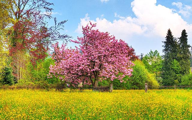 Сезонный календарь работ на май