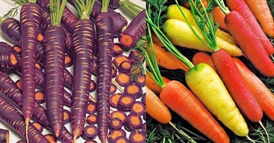 Необычные сорта моркови