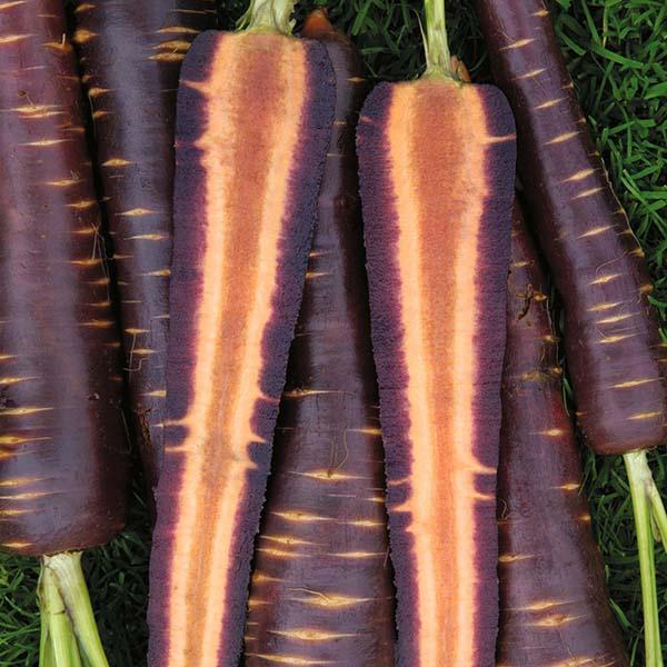 Purple Haze carrots