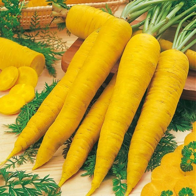 Yellowstone carrots