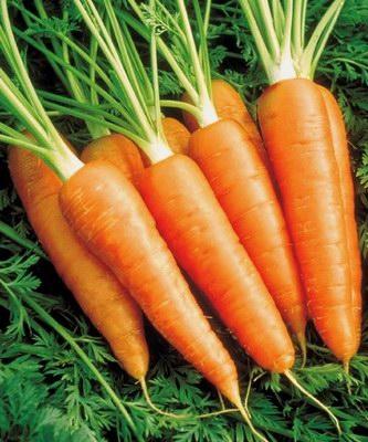 Хранение в камере моркови