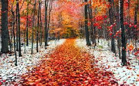 Сезонный календарь работ на ноябрь