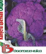 Сицилия пурпурная