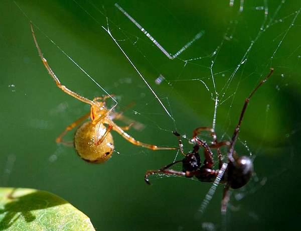 пауки против вредителей