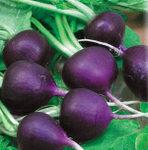 Малага фиолетовый редис