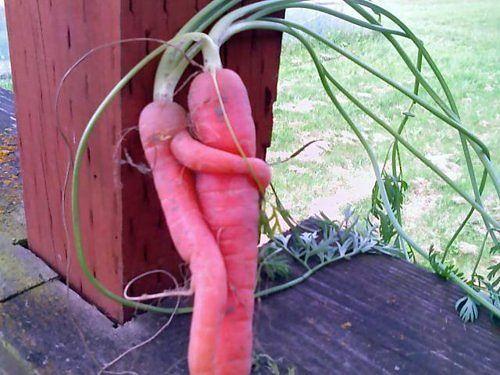 Овощи для поддержания сексуальной функции и разжигания страсти