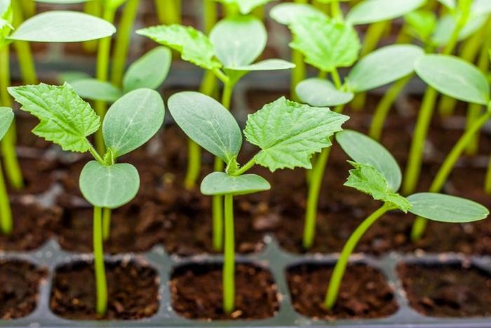 Какие овощи посеять в марте?