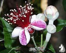 Жизнь и смерть растений-тропиканцев