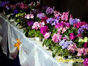 Почему не цветут сенполии