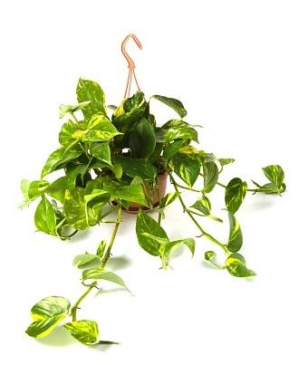 Растения возле школы названия