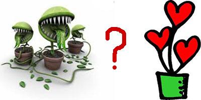 Комнатные растения: вампиры и доноры