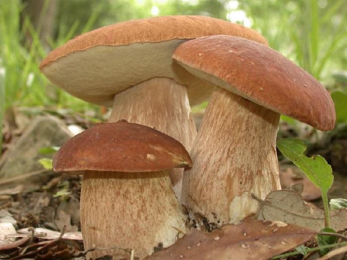 Сушка белых грибов в русской печи