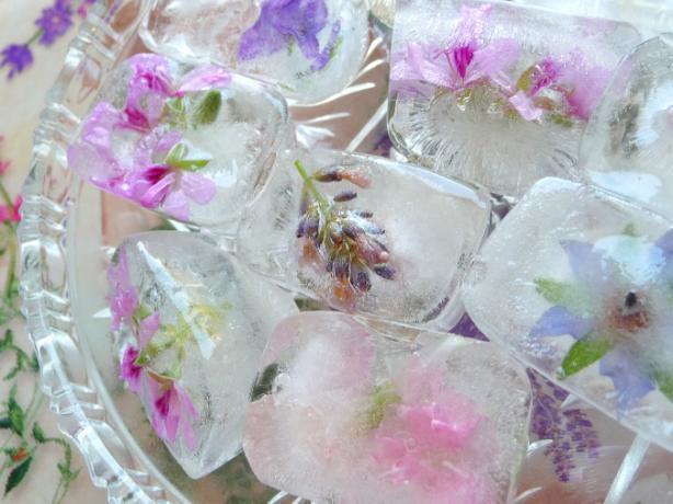 Замороженный цветы