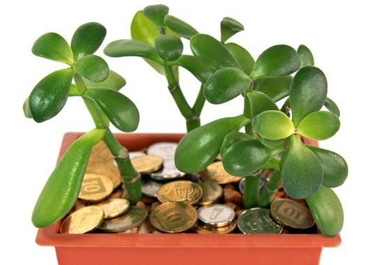 Растения, привлекающие деньги
