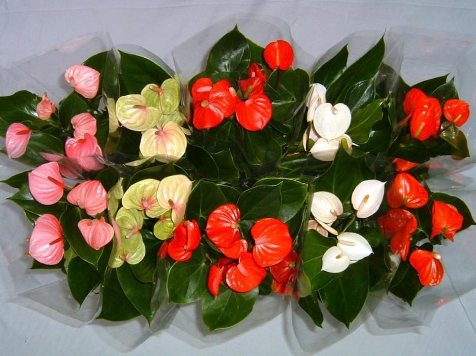 Комнатные растения для привлечения любви