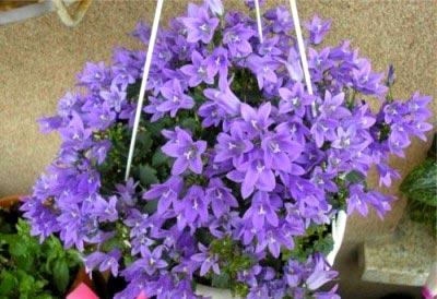 Цветы, которые приносят удачу